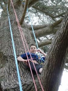 Escalade d'un arbre géant : pause sur une branche !