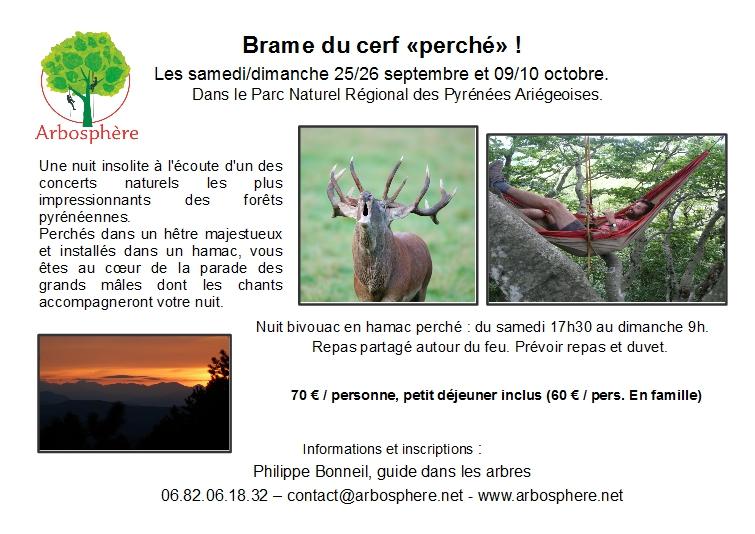 brame du cerf perché - nuit dans les arbres - automne 2021
