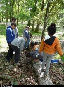 A la recherche des insectes du bois mortrt