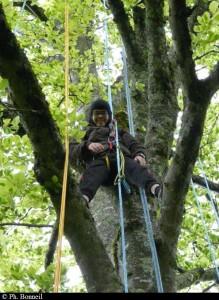 Emmitouflé sur les branches