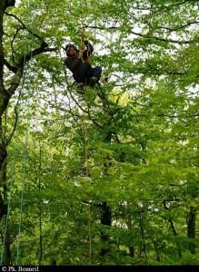 A l'exploration de la canopée