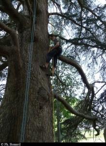 Découverte grimpe d'arbres à Fiches
