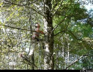 Grimpe d'arbres