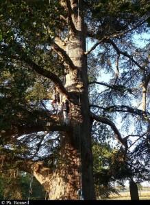 Grimpe d'arbres à Fiches