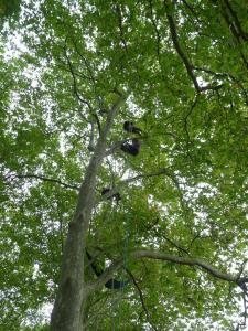 Foire aux plantes rares - St Cômes d'Olt 2016